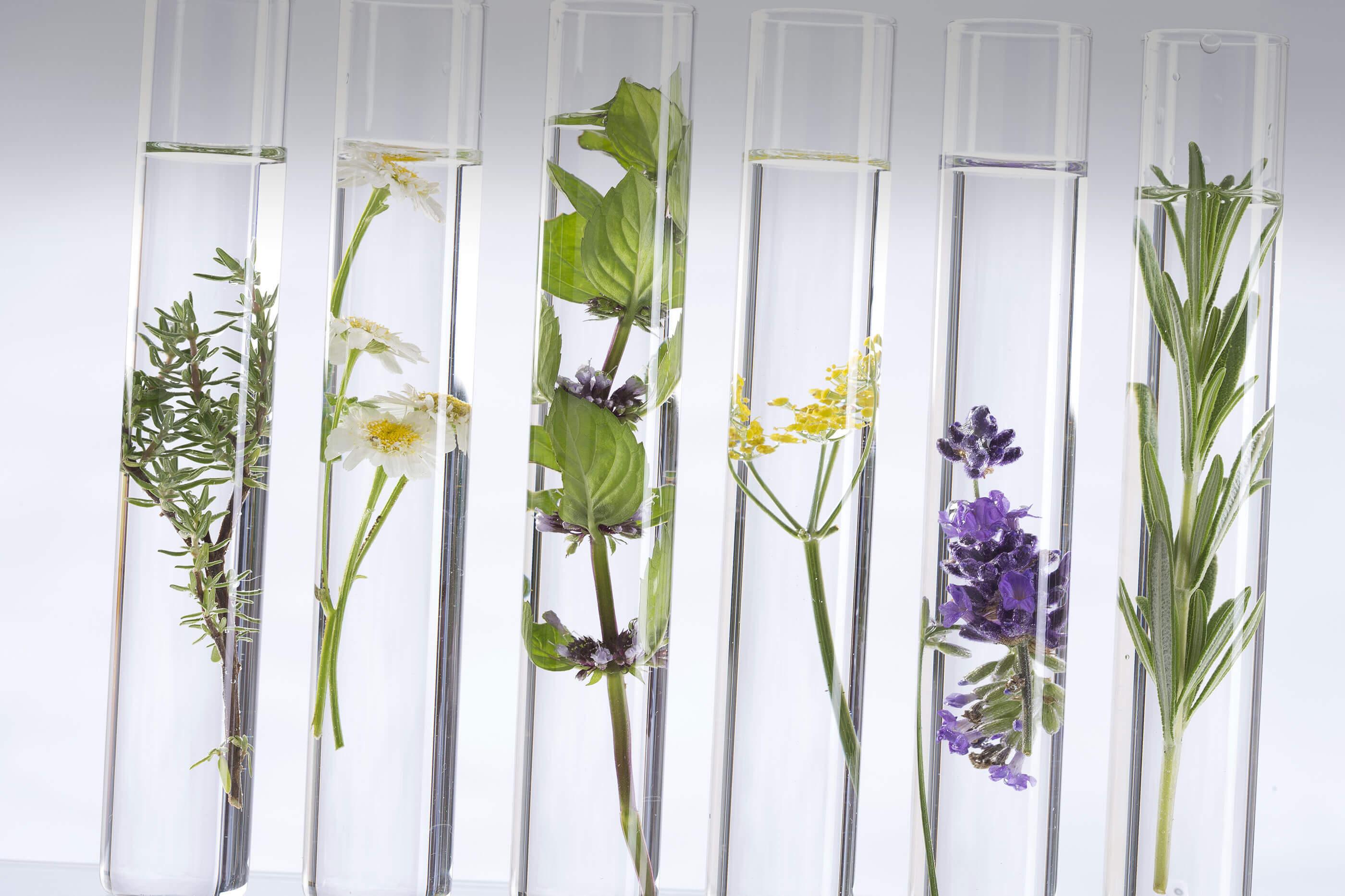 ruth-fischer-heilpflanzen-apomedica